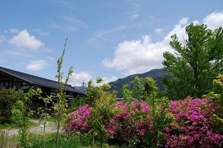2011 5 11ヒラド2.jpg