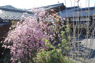 2012 4 27水車桜.JPG
