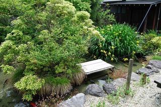 2012 5 30 カキツバタ黄.jpg