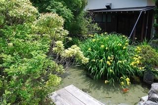 2013525かきつばた池.jpg