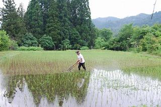 2013草取り1.jpg